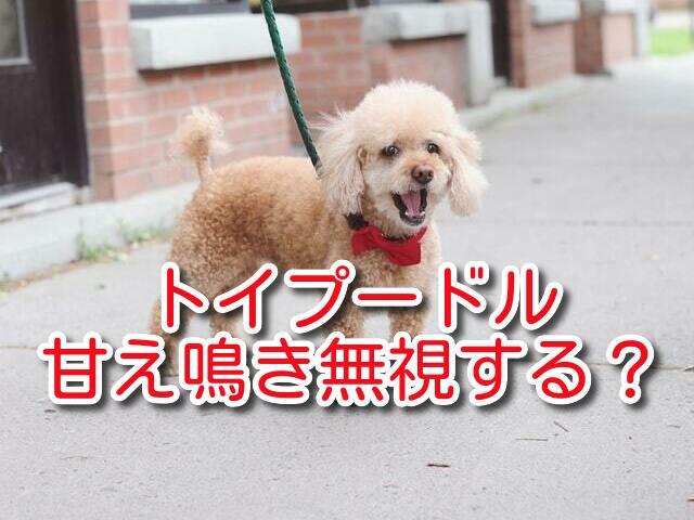 トイプードル 甘え鳴き 子犬 要求吠え 無視 無駄吠え しつけ 方法
